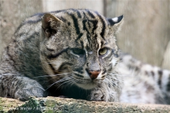 Zoo_Aschersleben_080814_copy_Heike_Weiler_IMG_4742