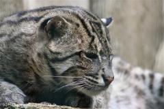 Zoo_Aschersleben_080814_copy_Heike_Weiler_IMG_4744