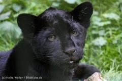 Zoo_Aschersleben_080814_copy_Heike_Weiler_IMG_4759