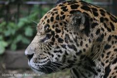 Zoo_Aschersleben_080814_copy_Heike_Weiler_IMG_4980