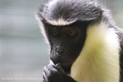 Zoo_Aschersleben_080814_copy_Heike_Weiler_IMG_5680