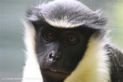 Zoo_Aschersleben_080814_copy_Heike_Weiler_IMG_5688