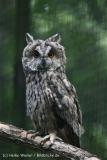 Zoo_Aschersleben_080814_copy_Heike_Weiler_IMG_5695