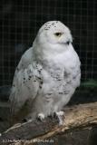 Zoo_Aschersleben_080814_copy_Heike_Weiler_IMG_5698