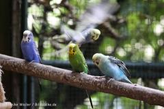 Zoo_Aschersleben_080814_copy_Heike_Weiler_IMG_5710