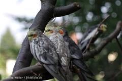 Zoo_Aschersleben_080814_copy_Heike_Weiler_IMG_5717
