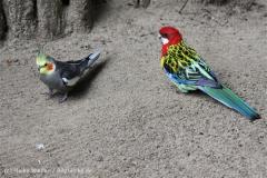 Zoo_Aschersleben_080814_copy_Heike_Weiler_IMG_5723
