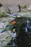Zoo_Aschersleben_080814_copy_Heike_Weiler_IMG_5733