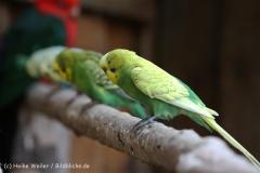 Zoo_Aschersleben_080814_copy_Heike_Weiler_IMG_5737