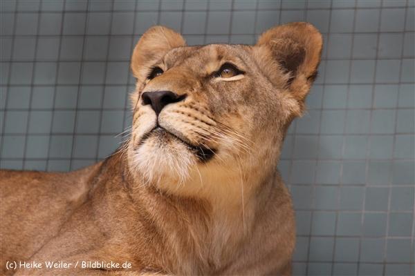 Zoo Berlin270710 - 100IMG_9437