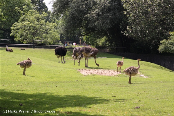 Zoo Berlin270710 - 100IMG_9756