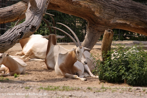 Zoo Berlin270710 - 100IMG_9767