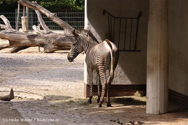 Zoo Berlin270710 - 100IMG_9769