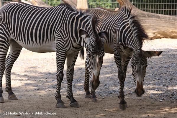 Zoo Berlin270710 - 100IMG_9785