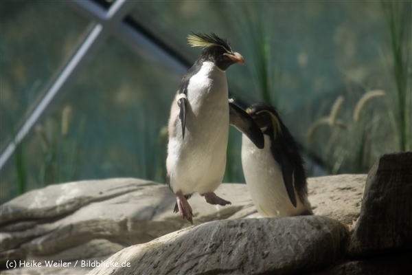 Zoo Berlin270710 - 100IMG_9796