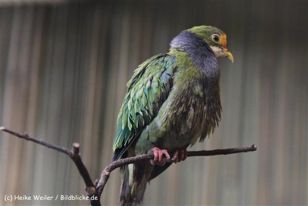 Zoo Berlin270710 - 101IMG_0135