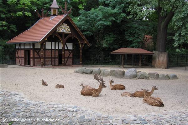 Zoo Berlin270710 - 101IMG_0188_1575
