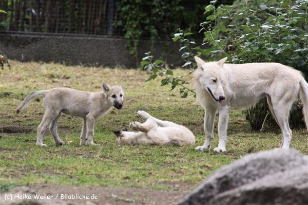 Zoo Berlin270710 - 101IMG_0241