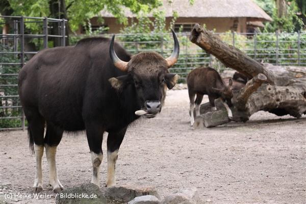 Zoo Berlin270710 - 101IMG_0246