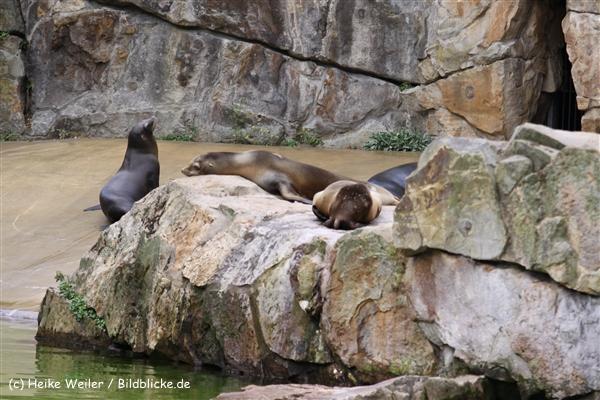 Zoo Berlin270710 - 101IMG_0255