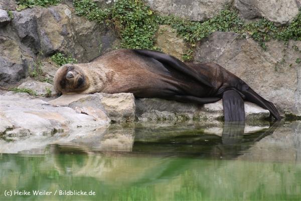Zoo Berlin270710 - 101IMG_0268