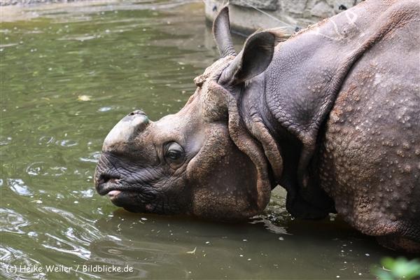 Zoo Berlin270710 - 101IMG_0315