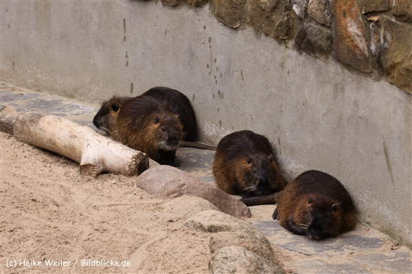 Zoo Berlin270710 - 101IMG_0330