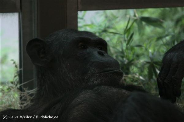 Zoo Berlin270710 - 101IMG_0343