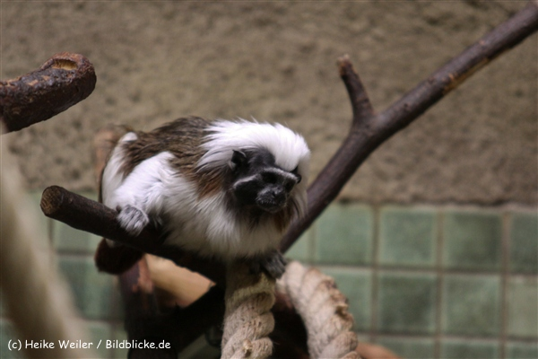 Zoo Berlin270710 - 101IMG_0345
