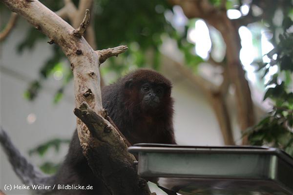 Zoo Berlin270710 - 101IMG_0360