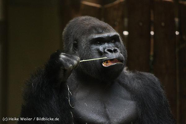 Zoo Berlin270710 - 101IMG_0371