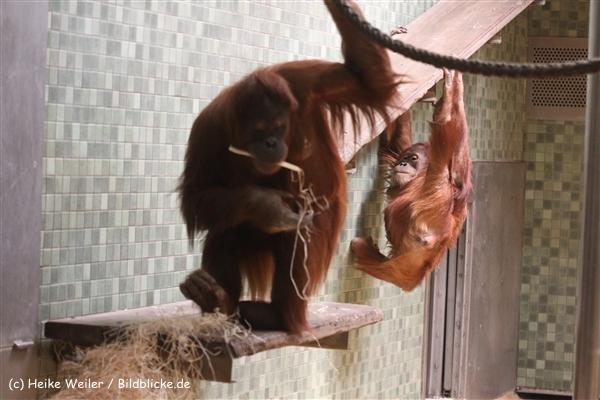 Zoo Berlin270710 - 101IMG_0379