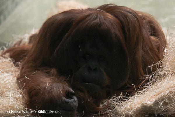 Zoo Berlin270710 - 101IMG_0386-2