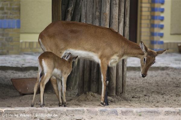 Zoo Berlin270710 - 101IMG_0404