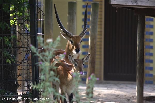Zoo Berlin270710 - 101IMG_0407