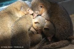 Zoo Berlin270710 - 100IMG_9401