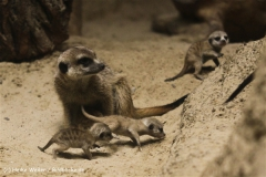 Zoo Berlin270710 - 100IMG_9496