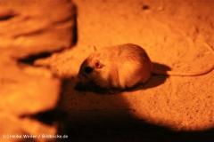 Zoo Berlin270710 - 100IMG_9512