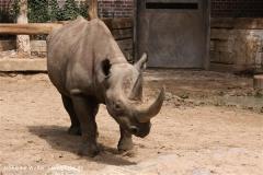 Zoo Berlin270710 - 100IMG_9691