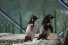 Zoo Berlin270710 - 100IMG_9813