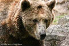 Zoo Berlin270710 - 100IMG_9899