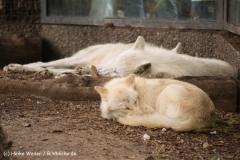Zoo Berlin270710 - 100IMG_9913