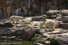 Zoo Berlin270710 - 101IMG_0011