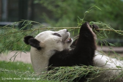 Zoo Berlin270710 - 100IMG_9577