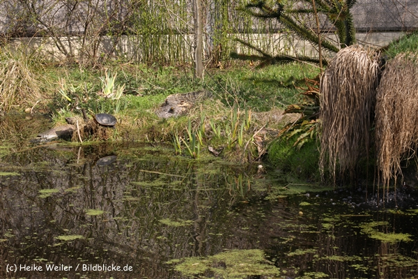 Zoo-Braunschweig-060410-IMG_9325