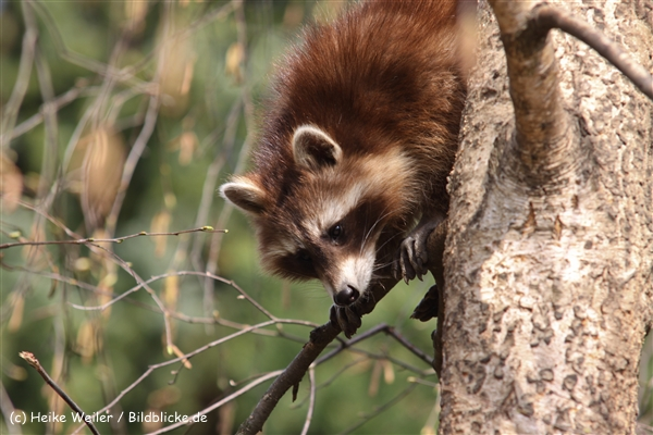 Zoo-Braunschweig-060410-IMG_9345