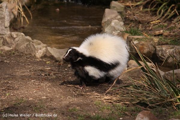 Zoo-Braunschweig-060410-IMG_9359