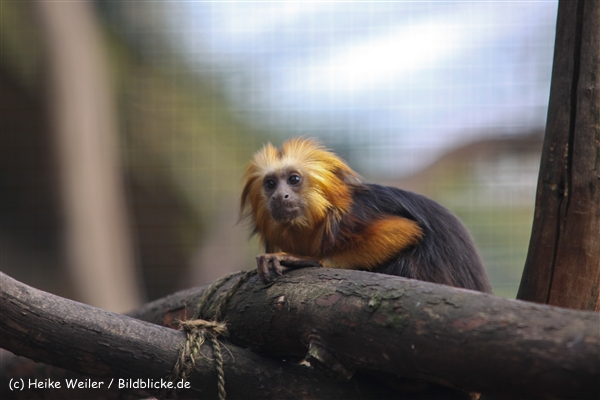 Zoo-Braunschweig-060410-IMG_9458
