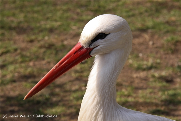 Zoo-Braunschweig-060410-IMG_9496
