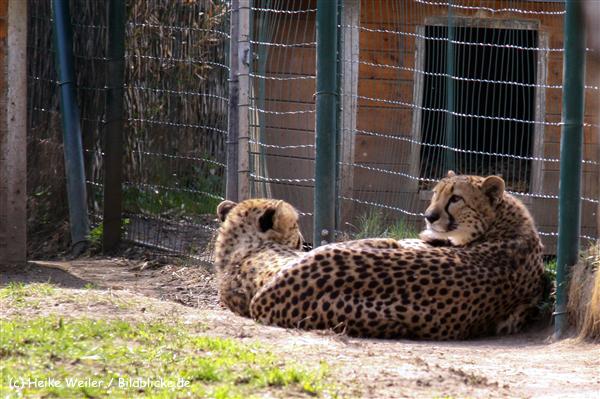 Zoo-Braunschweig-060410-IMG_9512